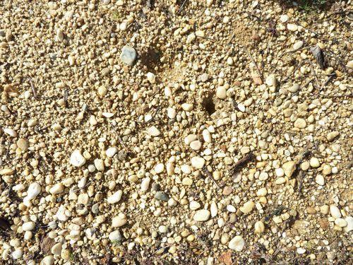 石灰質黏土